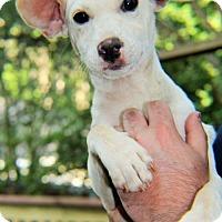 Adopt A Pet :: Bunny - Mobile, AL