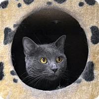 Adopt A Pet :: Katie - Wheaton, IL