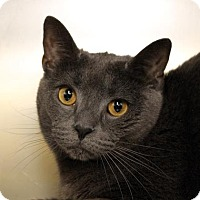 Adopt A Pet :: Boris - Richmond, VA