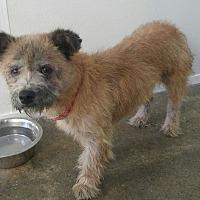 Adopt A Pet :: Teddi # 1132 - Nixa, MO