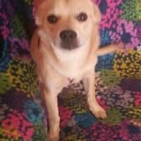 Adopt A Pet :: Babe - Amarillo, TX