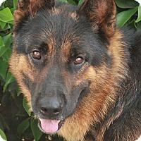 German Shepherd Dog Mix Dog for adoption in Los Angeles, California - Otis von Oslob