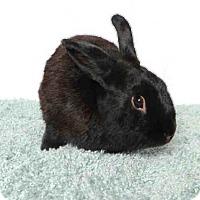Adopt A Pet :: DAVID - Murray, UT