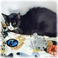Adopt A Pet :: Poppy - Howell, MI