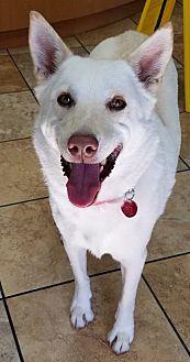 Shepherd (Unknown Type) Mix Dog for adoption in Las Vegas, Nevada - Whisper