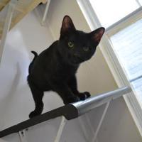 Adopt A Pet :: Molecule - Covington, LA