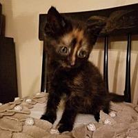 Adopt A Pet :: Sansa - Crocker, MO