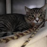 Adopt A Pet :: Beaker - New Milford, CT