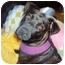 Photo 2 - Mountain Cur/Labrador Retriever Mix Dog for adoption in Williston, Vermont - Lizzie