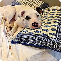 Adopt A Pet :: Mabel - Courtesy Posting - New Canaan, CT