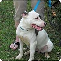 Adopt A Pet :: Magic - Glastonbury, CT