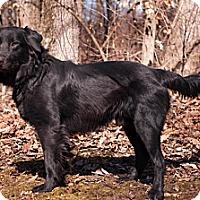 Adopt A Pet :: Morgan - Lewisville, IN