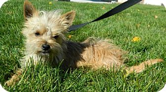 Terrier (Unknown Type, Small) Mix Dog for adoption in Columbus, Nebraska - Happy