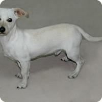 Adopt A Pet :: Finn - Lufkin, TX