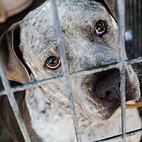 Adopt A Pet :: Jazzy - Odessa, TX