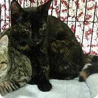 Adopt A Pet :: Midnight - Colmar, PA