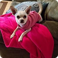 Adopt A Pet :: Zoe - Lodi, CA