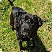 Adopt A Pet :: Wink - Lisbon, OH