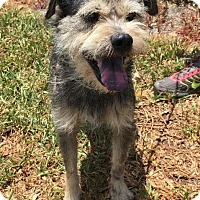 Adopt A Pet :: Peewee - Maquoketa, IA