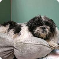 Adopt A Pet :: SIMZI - Brooklyn, NY