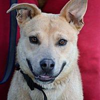 Adopt A Pet :: Reddie - Denver, CO