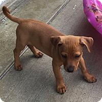 Adopt A Pet :: Peyton - Washington, PA