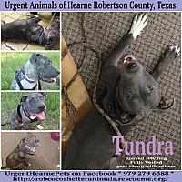 Adopt A Pet :: Tundra - Hearne, TX