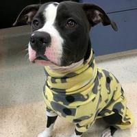 Adopt A Pet :: Sofie - Janesville, WI