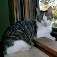 Adopt A Pet :: Rocco - Elk Grove Village, IL