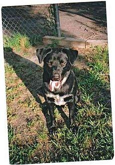 Australian Cattle Dog/Labrador Retriever Mix Dog for adoption in Longs, South Carolina - Hook