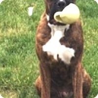 Adopt A Pet :: Mowgli-Adopted! - Turnersville, NJ