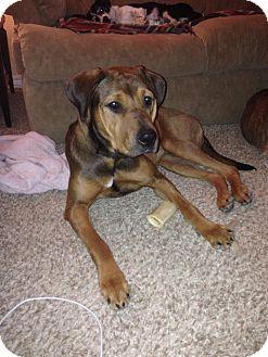 Hound (Unknown Type) Mix Dog for adoption in Las Vegas, Nevada - Sassy