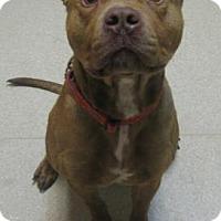 Adopt A Pet :: Bones - Gary, IN