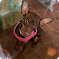 Adopt A Pet :: Mia Grace - Syracuse, NY