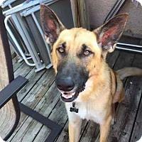 Adopt A Pet :: Max - Broken Arrow, OK