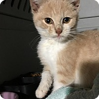 Adopt A Pet :: Griffin - East Brunswick, NJ