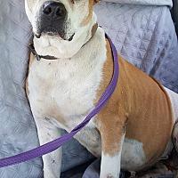 Adopt A Pet :: Buttercup - London, KY