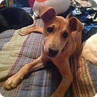 Adopt A Pet :: Quentin - St. Francisville, LA