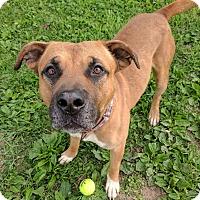 Adopt A Pet :: Tonka - Lisbon, OH