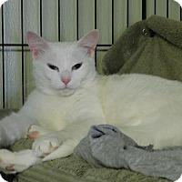 Adopt A Pet :: Winter - Winston-Salem, NC