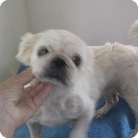 Adopt A Pet :: Cookie - Bonifay, FL