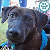 Adopt A Pet :: Frank - Kimberton, PA