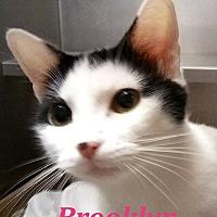 Adopt A Pet :: Brooklyn - El Cajon, CA