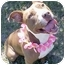 Photo 3 - American Pit Bull Terrier Mix Dog for adoption in Huntington, New York - Margie