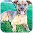 Photo 3 - Dachshund/American Pit Bull Terrier Mix Dog for adoption in Seattle, Washington - Boomer