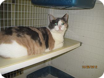 Calico Cat for adoption in Collinsville, Oklahoma - Penny