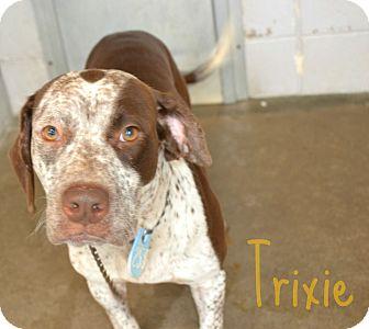 Labrador Retriever Mix Dog for adoption in Beaumont, Texas - Trixie