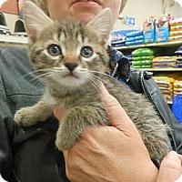 Adopt A Pet :: Tori - Reston, VA