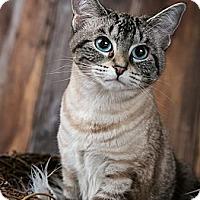 Adopt A Pet :: Daisy - Eagan, MN