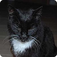 Adopt A Pet :: Kat - Laguna Woods, CA